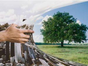 WASABI : l'agriculture urbaine à la pointe